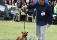 adare_dog_show_2013_17