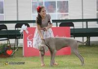 adare_dog_show_2013_6
