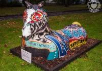 dolf_patijn_Limerick_urban_horse_19092014_0014