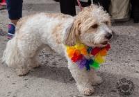 dolf_patijn_Limerick_Pride_30082014_0274