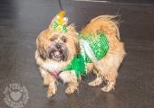 dolf_patijn_Limerick_St_Patricks_Day_17032017_0316